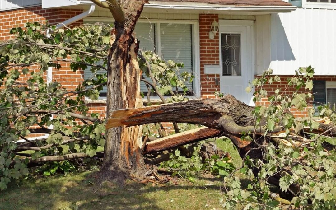 7 Tips to Protect Your Home from Wind Damage